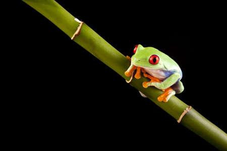green crazy frog photo