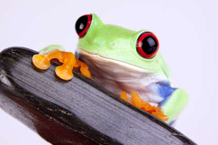 Frog portrait photo