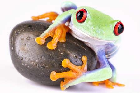 Frog on rock Stock Photo - 7273048