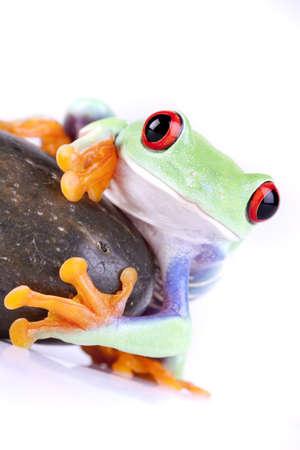 Frog on rock photo