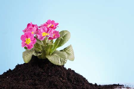 petites fleurs: Des fleurs dans le sol ! Banque d'images
