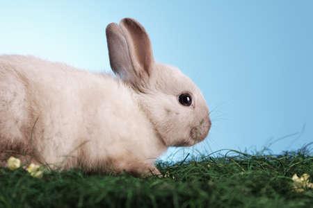 conejo pascua: Dulce conejo de Pascua Foto de archivo