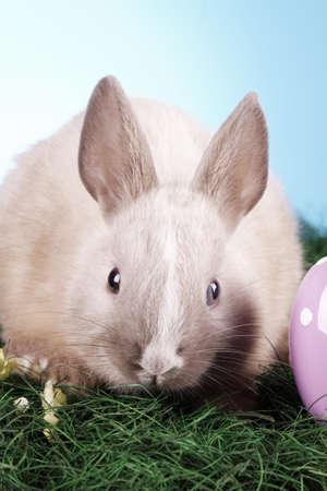 conejo pascua: Conejo de Pascua