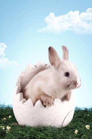 conejo pascua: Conejo de Pascua en el huevo