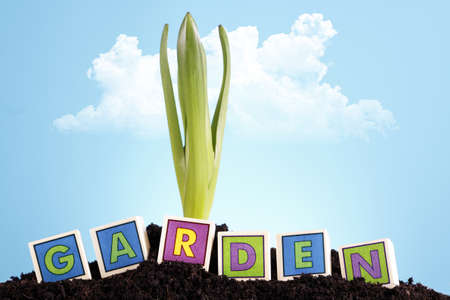 Gardening concept photo
