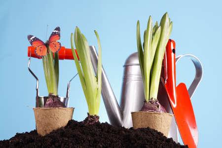 Gardening concept Stock Photo - 8993073