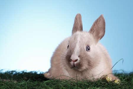 Easter Rabbit! photo