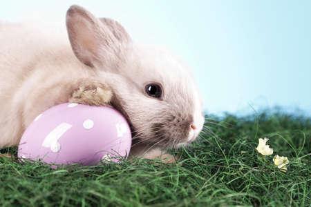 conejo pascua: Conejo de Pascua! Foto de archivo