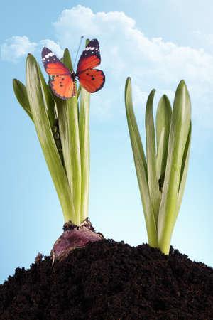 Green seedlings Stock Photo - 8995007