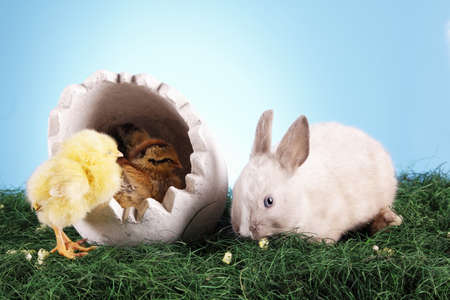 Easter bunny and chicken photo