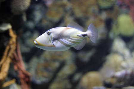 hardcoral: fish
