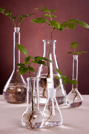 tree plan: Experiments on plants Stock Photo