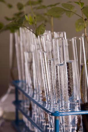 echnology: Experiments on plants Stock Photo