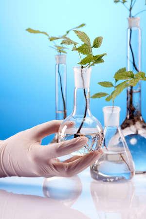 Experiments on plants Stock Photo - 10260727
