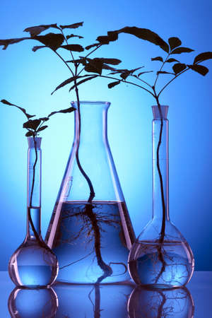 echnology: Plant experiment in laboratory Stock Photo