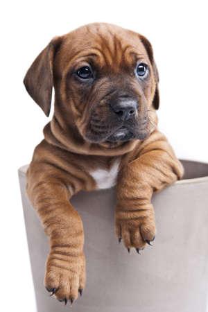 Young happy dog in pot Фото со стока