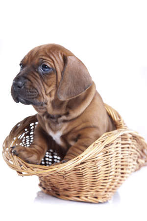 Young happy dog in basket photo