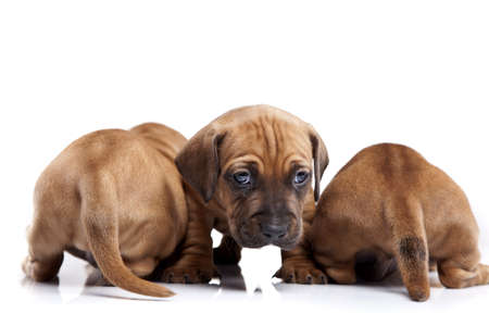 Three happy dogs isolated on white background photo