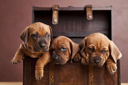 cute dogs: Three happy dogs in chest