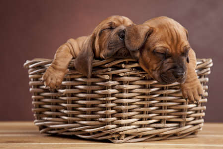 Two dogs speeping in basket photo