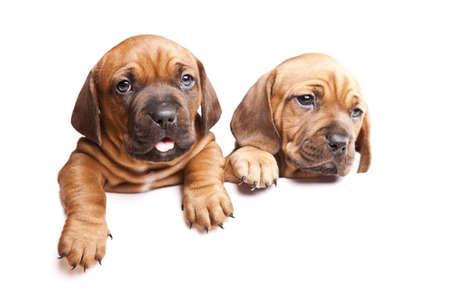 Messaggio da cani isolato su sfondo bianco Archivio Fotografico