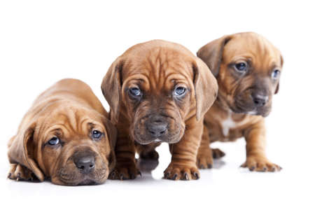 Young pretty dogs isolated on white background photo