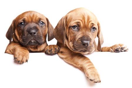 Messaggio da cani!