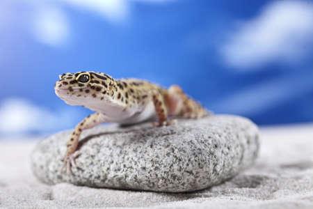 Gecko on sand photo