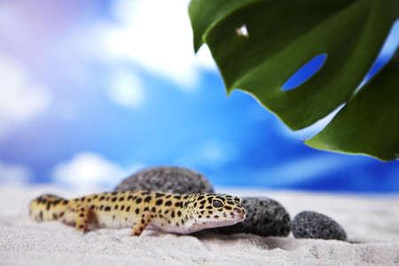 Gecko on sand