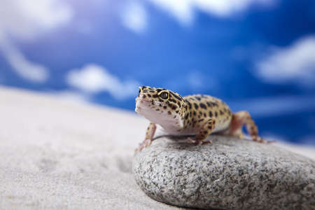 insectivores: Gecko on rock
