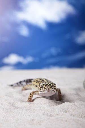insectivores: Gecko on sand