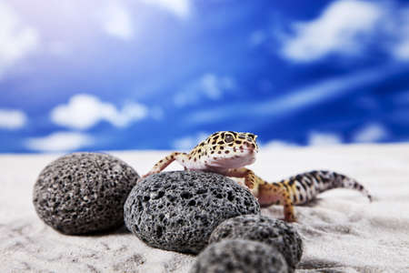 insectivores: Gecko on rocks