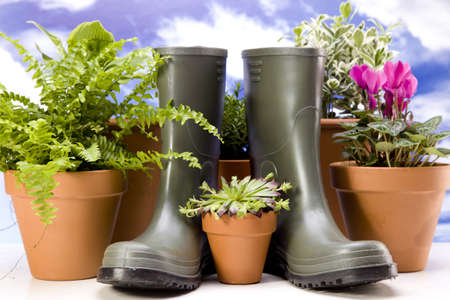 Flowers and garden tools Stock Photo - 13812860