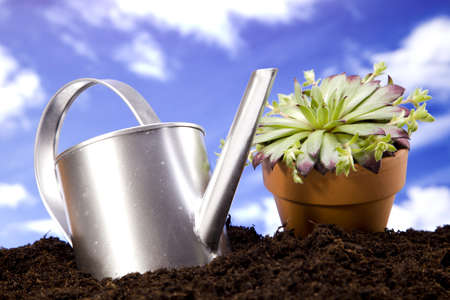 Flowers and garden tools Stock Photo - 13812855