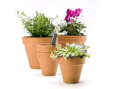 Flowers and garden tools isolated on white backgroud Stock Photo - 13812730