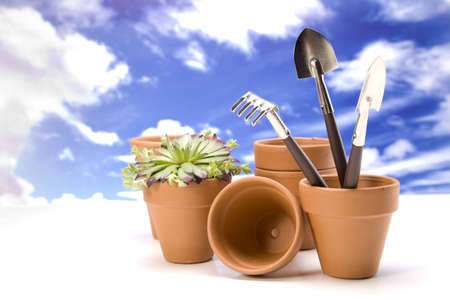 Flowers and garden tools Stock Photo - 13798062