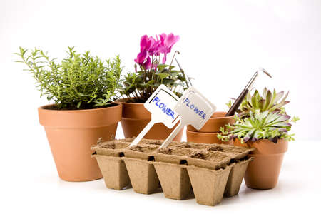 Flowers and garden tools Stock Photo - 13798082