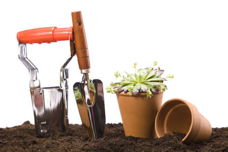 Flowers and garden tools Stock Photo - 13798052
