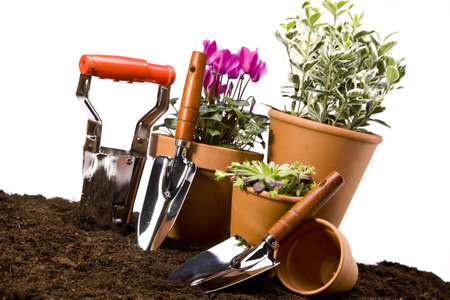 Flowers and garden tools photo