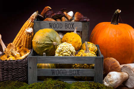 Fresh mushrooms, corn and pumpkin  fall food on wooden table Stock Photo