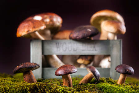 Composition of fresh mushrooms  fall food on wooden table photo