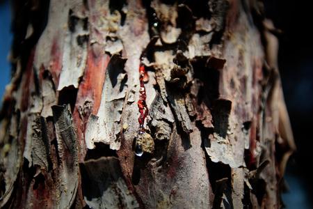 resin: resina Foto de archivo