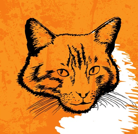 cat drawing vector on grunge background Vector