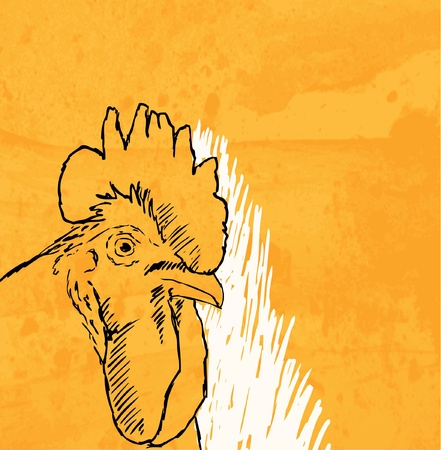 rooster sketch on grunge background Vector