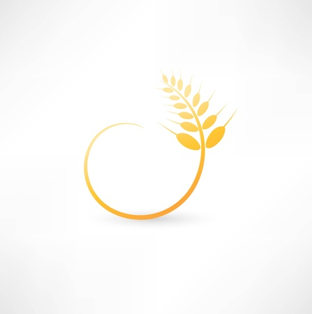 grain fields: Wheat ears icon Illustration