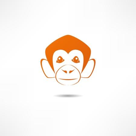 apes: monkey