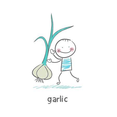 horizontal lines: Garlic and people Illustration