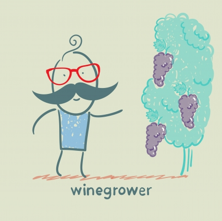 winegrower looks at grapes Vector