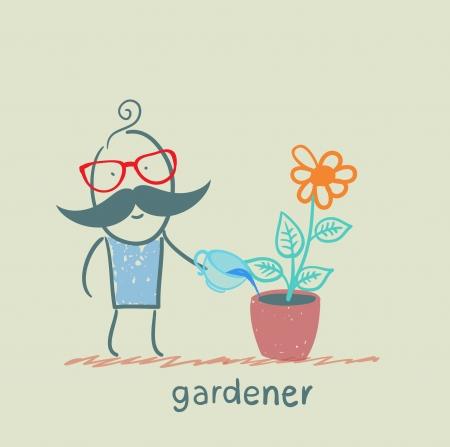 gardener waters the flowers in a pot