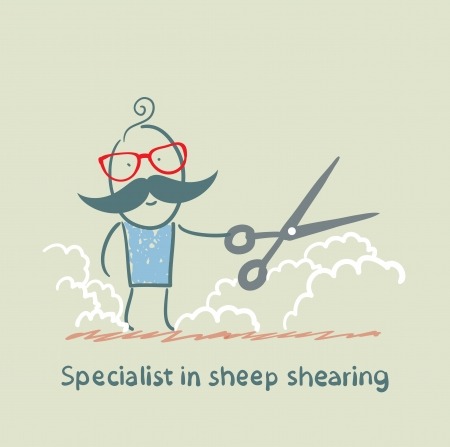 specialist: Specialist sheep shearing